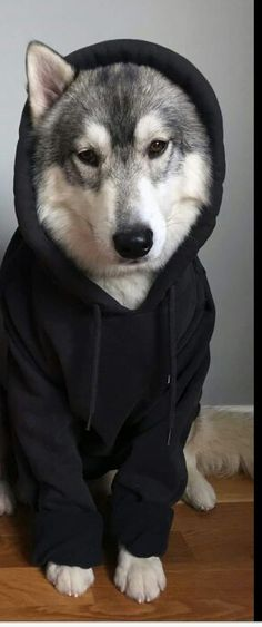 "Will, in his dire husky form, ""what?"" the dog asked, ""do i have something on my face?"" he shook his head, making his hood fall off."