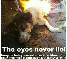 The eyes never lie! #StopYulin2015