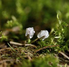 Stříbrné náušnice s přírodními diamanty Náušničky ze stříbra 925 s přírodním diamantem. Stejné náušničky ve zlatě najdete zde:http://www.fler.cz/zbozi/zlate-nausnice-s-diamanty-18-karatu-7253781 Pro jakýkoliv dotaz jsem zde, napište mi :) *Diamanty maji cca 3-4mm a celková váha je cca 1 karát. * Na šperk dávám dvouletou záruku a každý zákazník má také ze...