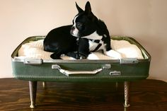 upcycled suitcase pet bed :)