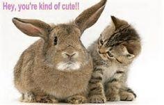 animal humor #animal #funny #humor #lol