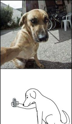 Dog selfies...