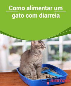 Gato com diarreia: veja qual alimentação mais adequada!  Um #gato com #diarreia não deve ser motivo de #preocupação se essa condição não persistir por mais de um dia, caso persista você deverá levá-lo ao #veterinário. #Saúde