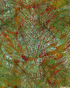 Fern Forest Batik - Persimmon