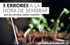 5 errores habituales en la siembra en semilleros