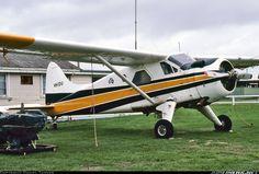 De Havilland Canada DHC-2 Beaver Mk1 aircraft picture
