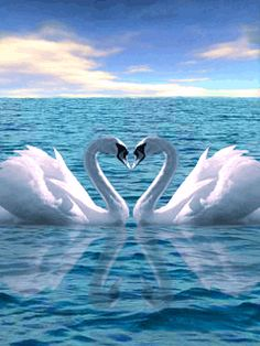 ✯✯✯Eternally Yours!....For In A Figure Of Eight, The  Swans A Loving Heart Make!~c.c.c~ surprise.com ✯✯✯