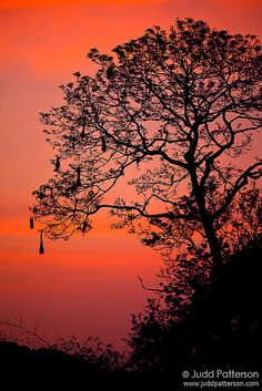 Oropendola Dawn by Judd Patterson, Beautiful Sunset, Beautiful World, Beautiful Images, Fall Clip Art, Sunset Pictures, Pretty Pictures, The Great Outdoors, Natural Beauty, Nature Photography