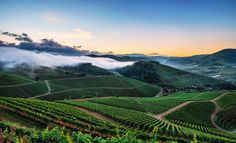 Vineyards by Pascal Schirmer on 500px