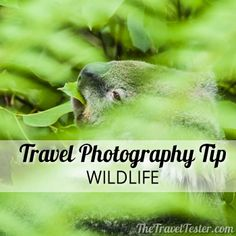 Wildlife Photography Tips For Travellers