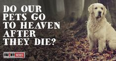 Do Our Pets Go To Heaven After They Die?
