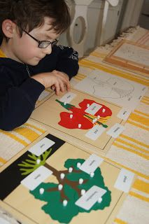 Montessori Botany Cabinet Work