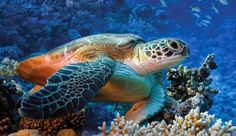 PETALI DI CILIEGIO ...per coltivare la speranza: In difesa degli animali: le tartarughe marine
