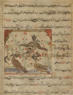 Folio from a Manafi'al-hayawan (Usefulness of animals) by Ibn Bakhtishu (d.1058); verso: Three hoopoes and a bush with red berries; recto: text, Description of hoopoes and their body organs as remedies for diseases 1315 Il-Khanid period  Ink, opaque watercolor and gold on paper H: 10.8 W: 11.2 cm  Iran  Purchase F1928.7  Freer-Sackler | The Smithsonian's Museums of Asian Art
