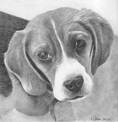 10 animaleschi splendidi disegni a matita
