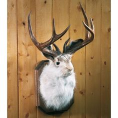 how to make a jackalope