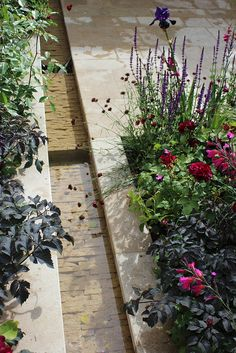 The Cloudy Bay Sensory Garden designed by Wilson McWilliam for Chelsea 2014…