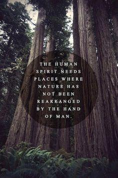 The human spirit needs wild nature.