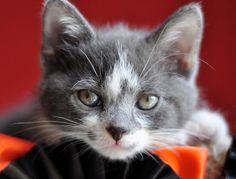 Good Morning Kitten - a site that collects kitten photos
