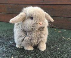 Great potography with cute bunnies - Süße Tiere - animals Baby Animals Super Cute, Cute Baby Bunnies, Cute Little Animals, Cute Funny Animals, Baby Farm Animals, Cutest Animals, Funny Dogs, Baby Animals Pictures, Cute Animal Pictures