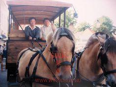 SWK - Wang Kiu & Wong Shun Leung
