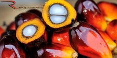 Ripples Commodity Blog: Crude Palm Oil Futures Are Expected Trade Sideways...