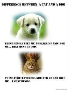 Difference between cats and dogs