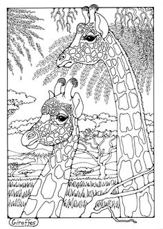 Giraffes Colouring Page By Dandi Palmer Animals To Colour In