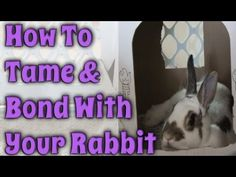 BudgetBunny: How To Tame & Bond With Your Rabbit - YouTube
