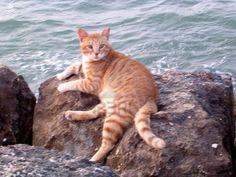 The big red cat on the Mediterranean Beach in Haifa, Israel                    Stock Photo