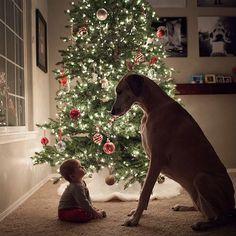 Adorable Little Kids With Big Dogs