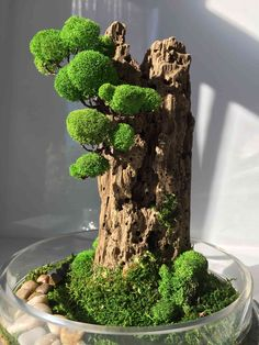 Waterfall terrarium with live moss plants in hex glass jar Plantas Bonsai, Bonsai Garden, Succulents Garden, Bonsai Trees, Moss Art, Succulent Terrarium, Succulent Display, Terrarium Wedding, Terraria