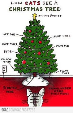 How cats see a Christmas tree.