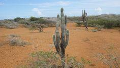 De North Coast route van het Christoffelpark - De reisblog van Johnno North Coast, Cactus Plants, Flora, Van, Cacti, Cactus, Plants, Vans, Vans Outfit