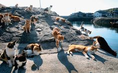"Tashirojima ""Cat Island"""