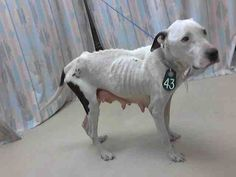 poor mama needs out of this filthy shit-hole asap and into a loving foster, please share - Harris county animal control