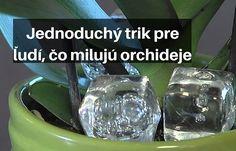 Do kvetináča s orchideami vložila kocky ľadu, keď zistíte prečo, urobíte to tiež – radynadzlato.sk Water Bottle, Gardening, Engagement, Crystals, Garten, Engagements, Crystals Minerals, Lawn And Garden, Crystal