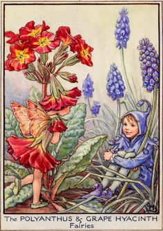 The Polyanthus and Grape Hyacinth Fairies - Flower Fairies of the Garden
