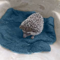 Hedgehog Bath Time Tips & Tricks - Heavenly Hedgies Hedgehog Bath, Bath Time, Heavenly, Hedgehogs, Bird, Daisy, Career, Passion, Carrera
