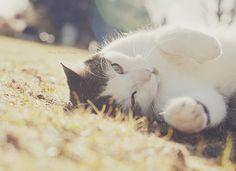 My beautiful cat! <3