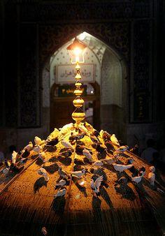 قربون کبوترای حرمت امام زضا Imam Reza, Imam Ali, Islamic Images, Islamic Pictures, Imam Hussain Wallpapers, Karbala Photography, Imam Hussain Karbala, Love In Islam, Muharram