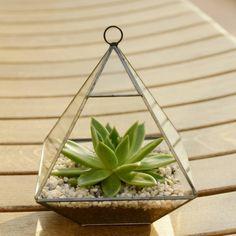 Geometric Glass Vase Succulent Terrarium