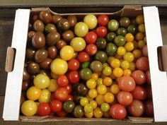Organic tomatoes from Sicily