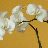 hu) - My site Good To Know, House Plants, Orchids, Van, Gardening, Flowers, Indoor House Plants, Lawn And Garden, Foliage Plants