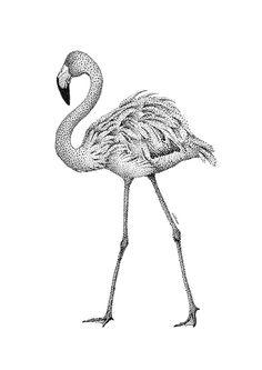 Mélisse 'Kaart Flamingo'