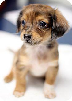 Pin by Evey Meg on Dogs a Girls Bestfriend | Pitbull terrier