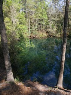 Devil's Hole is a sinkhole filled with water , The Florida National Scenic Trail 2011: