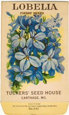 Vintage Flower Seed Packet Tuckers Seed House Lithograph LOBELIA (Carthage, Missouri)