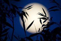 La luna llena ilumina la noche en Berlín (Alemania) ayer, domingo 23 de junio de 2013.