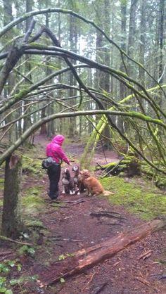 #Vancouver dogwalker